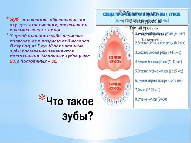 Что такое зубы? Зуб – это костное образование во рту для схватывания, откусыв...