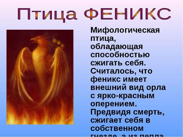 Мифологическая птица, обладающая способностью сжигать себя. Считалось, что ф...