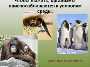 Чтобы выжить, организмы приспосабливаются к условиям среды. Забота о потомстве