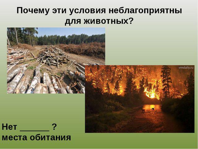 Почему эти условия неблагоприятны для животных? Нет ______ ? места обитания