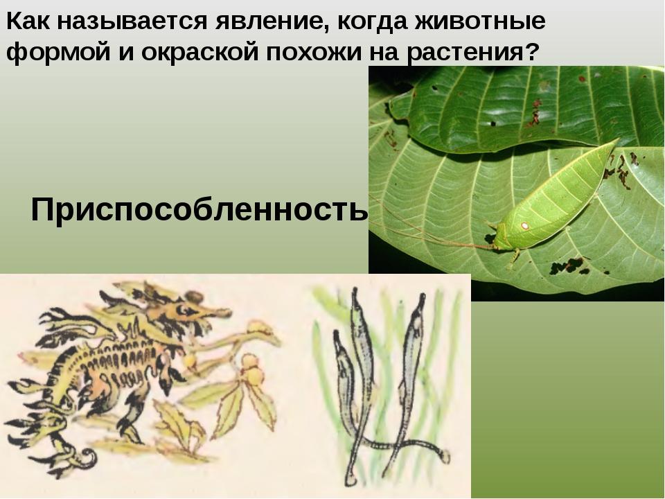 Приспособленность Как называется явление, когда животные формой и окраской по...
