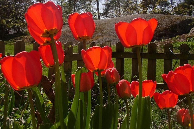 http://yosoy.net/wp-content/uploads/2012/10/El-hecho-de-que-puedo-plantar-una-semilla-1.jpg