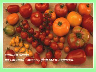 сочная ягода различной массы, формы и окраски.