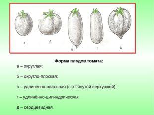 Форма плодов томата: а – округлая; б – округло-плоская; в – удлинённо-овальна