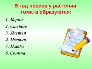 В год посева у растения томата образуются: 1. Корни 2. Стебель 3. Листья 4. Ц