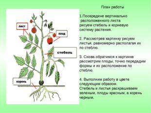 План работы Посередине вертикально расположенного листа рисуем стебель и корн