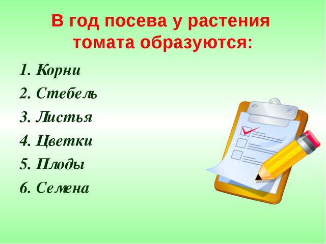 В год посева у растения томата образуются: 1. Корни 2. Стебель 3. Листья 4. Ц...