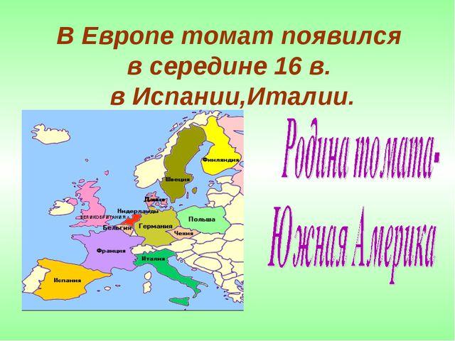 В Европе томат появился в середине 16 в. в Испании,Италии.
