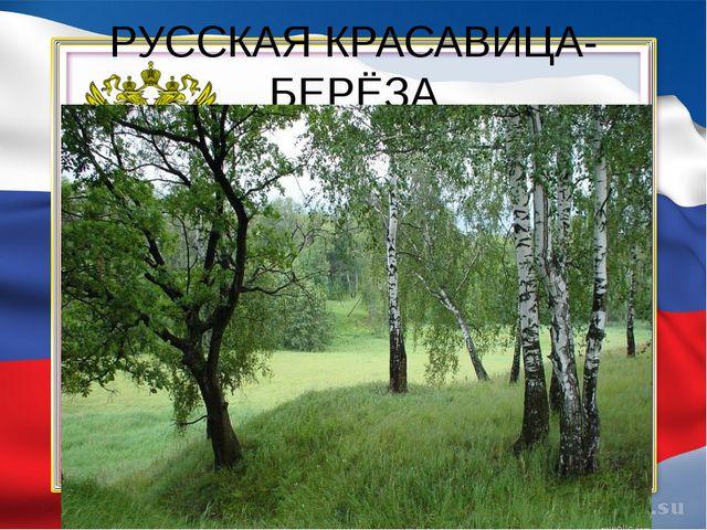 РУССКАЯ КРАСАВИЦА-БЕРЁЗА