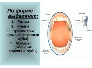 По форме выделяют: Резцы Клыки Премоляры (малые коренные зубы) Моляры (больш
