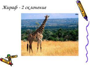 Жираф - 2 склонение