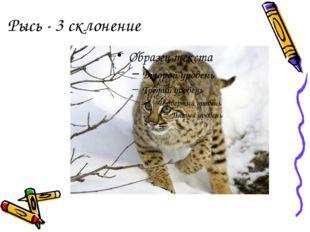 Рысь - 3 склонение