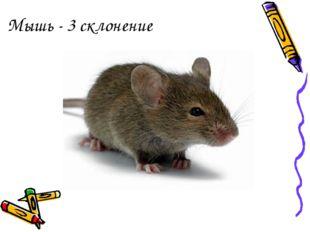 Мышь - 3 склонение