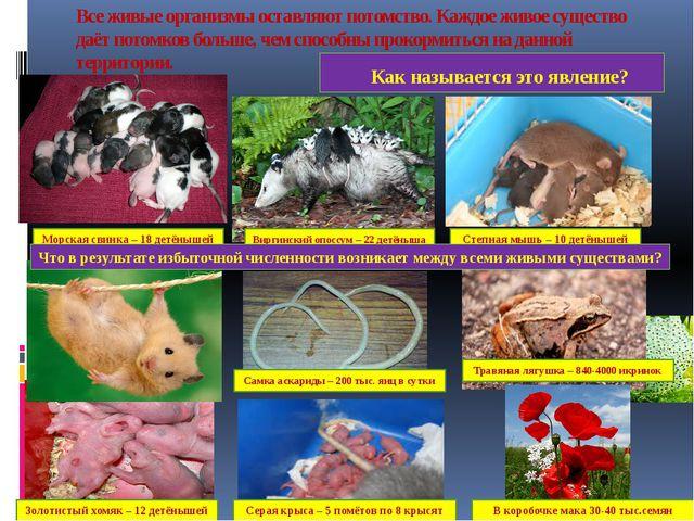 Все живые организмы оставляют потомство. Каждое живое существо даёт потомков...