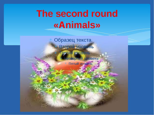 The second round «Animals»