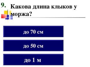 Какова длина клыков у моржа? до 1 м до 50 см до 70 см 9.