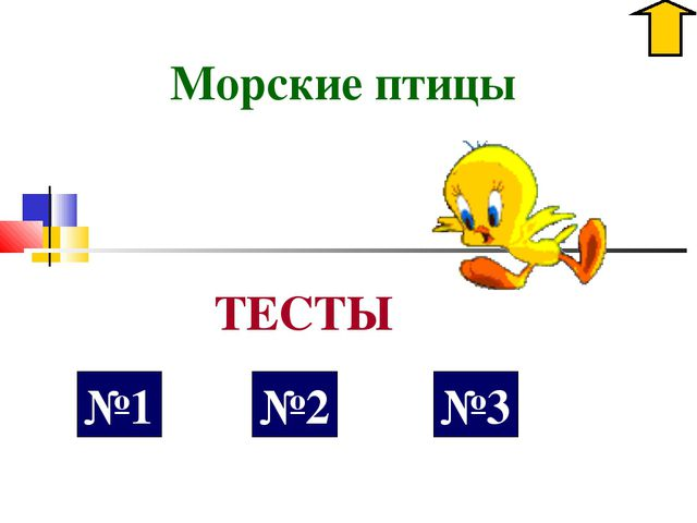 Морские птицы №1 ТЕСТЫ №2 №3