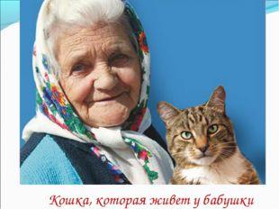 Кошка, которая живет у бабушки
