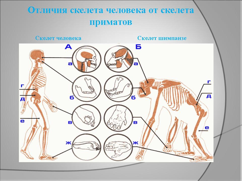 http://festival.1september.ru/articles/629590/presentation/9.JPG
