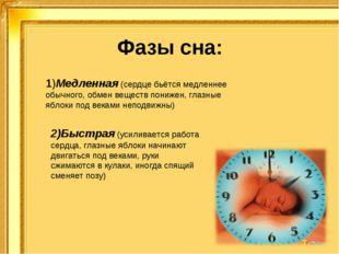 Фазы сна: 1)Медленная (сердце бьётся медленнее обычного, обмен веществ пониже