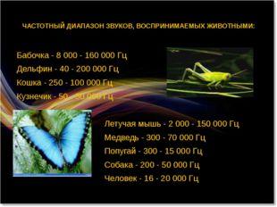 ЧАСТОТНЫЙ ДИАПАЗОН ЗВУКОВ, ВОСПРИНИМАЕМЫХ ЖИВОТНЫМИ: Бабочка - 8 000 - 160 0