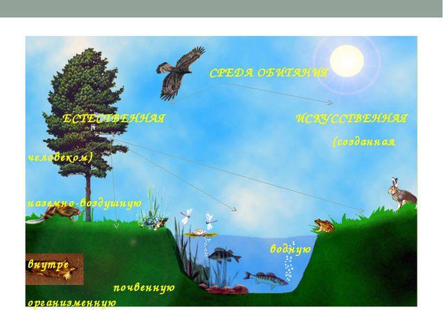 СРЕДА ОБИТАНИЯ ЕСТЕСТВЕННАЯ ИСКУССТВЕННАЯ (созданная человеком) наземно-возд...