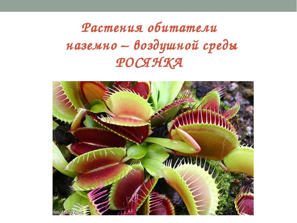 Растения обитатели наземно – воздушной среды РОСЯНКА