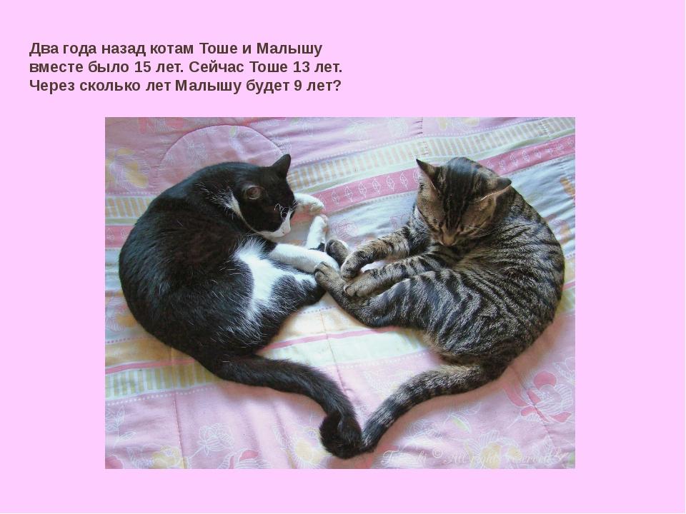 Два года назад котам Тоше и Малышу вместе было 15 лет. Сейчас Тоше 13 лет. Че...