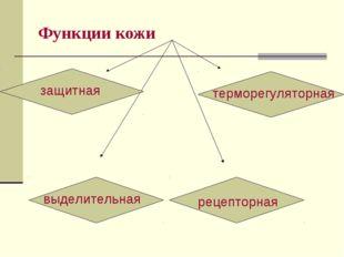 Функции кожи защитная выделительная терморегуляторная рецепторная