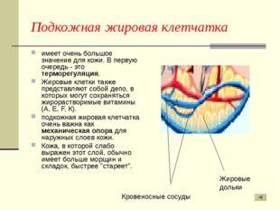 Подкожная жировая клетчатка имеет очень большое значение для кожи. В первую о