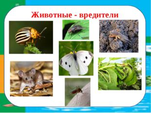 Животные - вредители