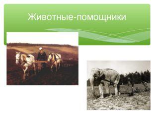 Животные-помощники