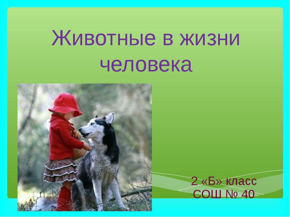 Животные в жизни человека 2 «Б» класс СОШ № 40