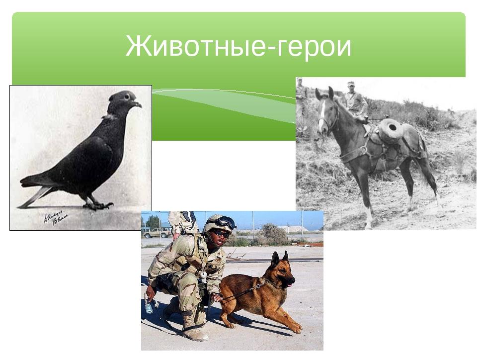 Животные-герои