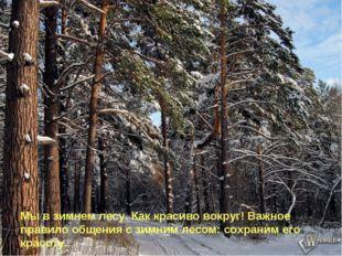 Мы в зимнем лесу. Как красиво вокруг! Важное правило общения с зимним лесом: