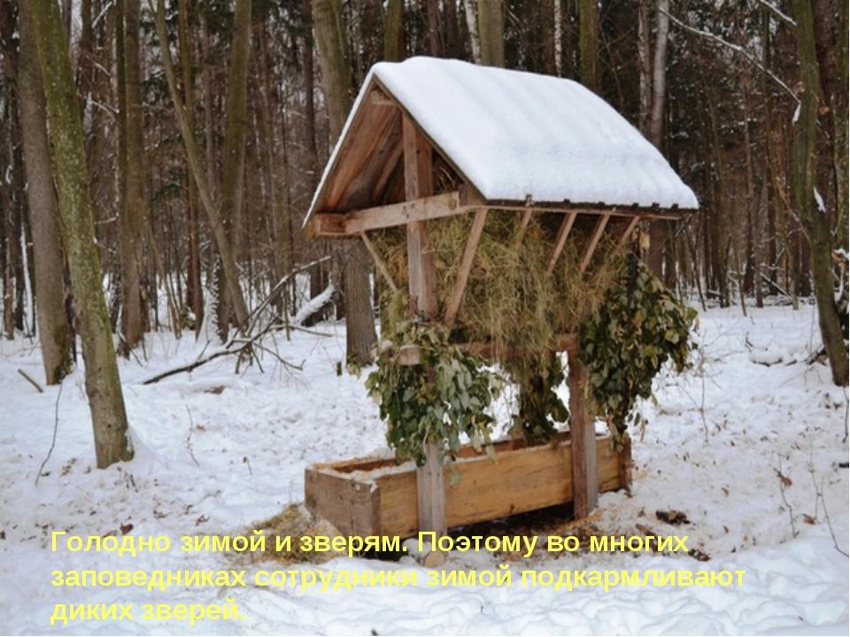 Голодно зимой и зверям. Поэтому во многих заповедниках сотрудники зимой подк...