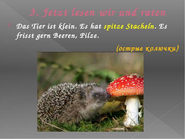 3. Jetzt lesen wir und raten Das Tier ist klein. Es hat spitze Stacheln. Es f...