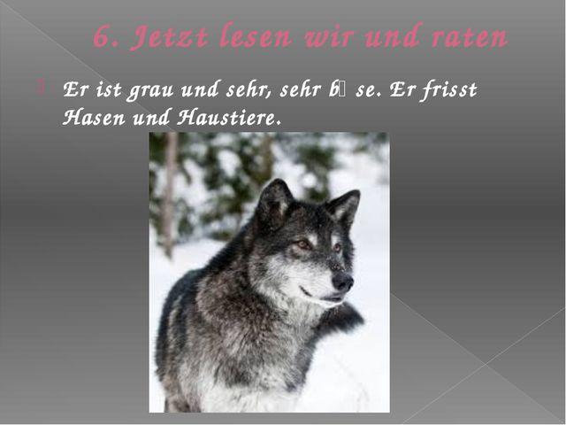6. Jetzt lesen wir und raten Er ist grau und sehr, sehr bӧse. Er frisst Hasen...