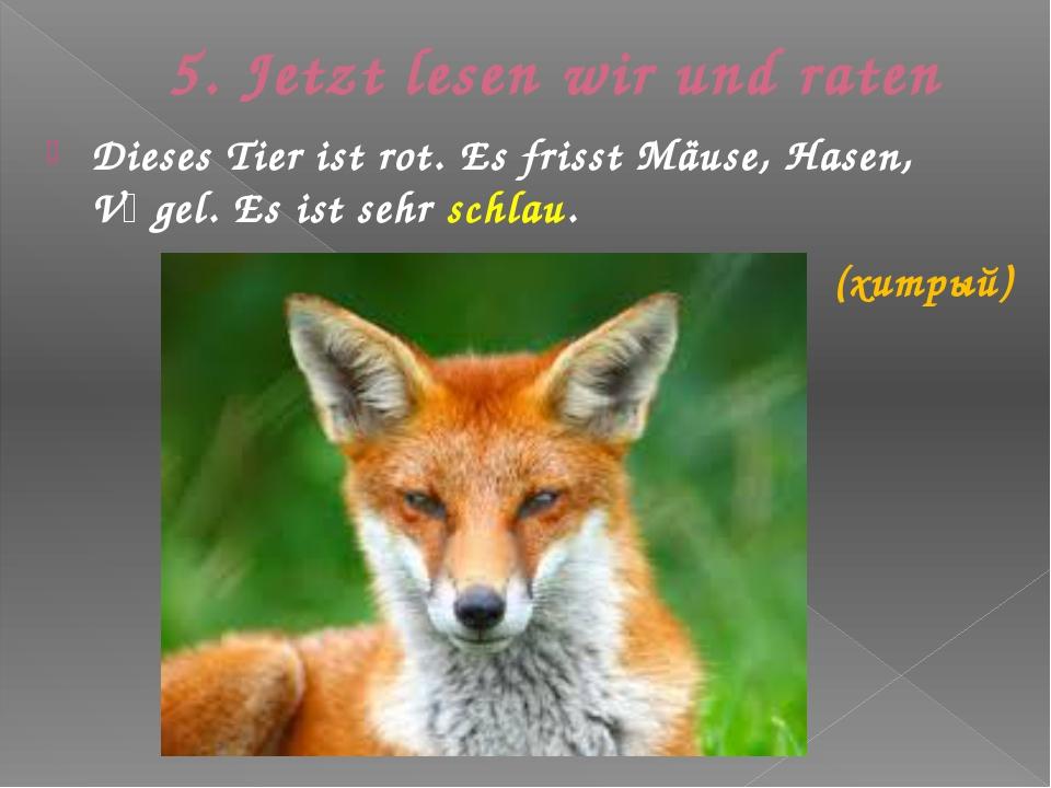 5. Jetzt lesen wir und raten Dieses Tier ist rot. Es frisst Mäuse, Hasen, Vӧg...