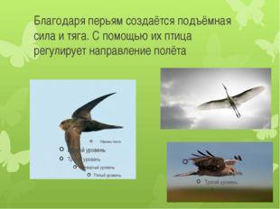 Благодаря перьям создаётся подъёмная сила и тяга. С помощью их птица регулиру