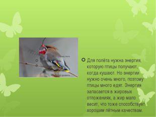 Для полёта нужна энергия, которую птицы получают, когда кушают. Но энергии н
