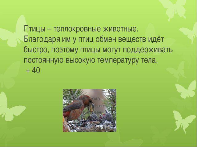 Птицы – теплокровные животные. Благодаря им у птиц обмен веществ идёт быстро,...