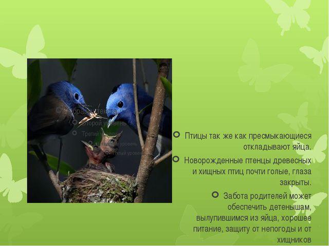 Птицы так же как пресмыкающиеся откладывают яйца. Новорожденные птенцы древе...