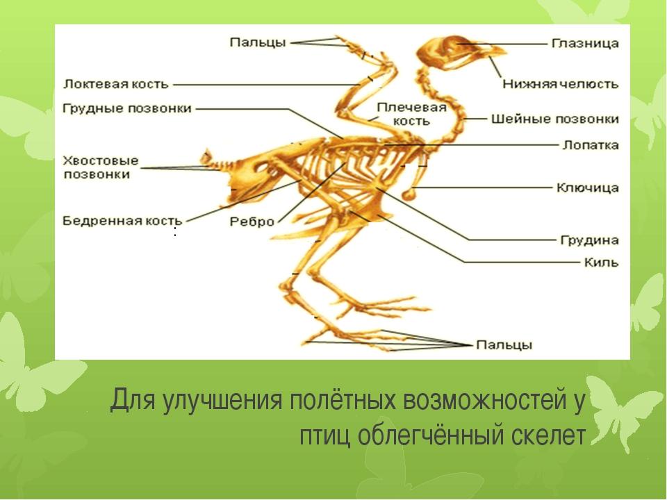 Для улучшения полётных возможностей у птиц облегчённый скелет :