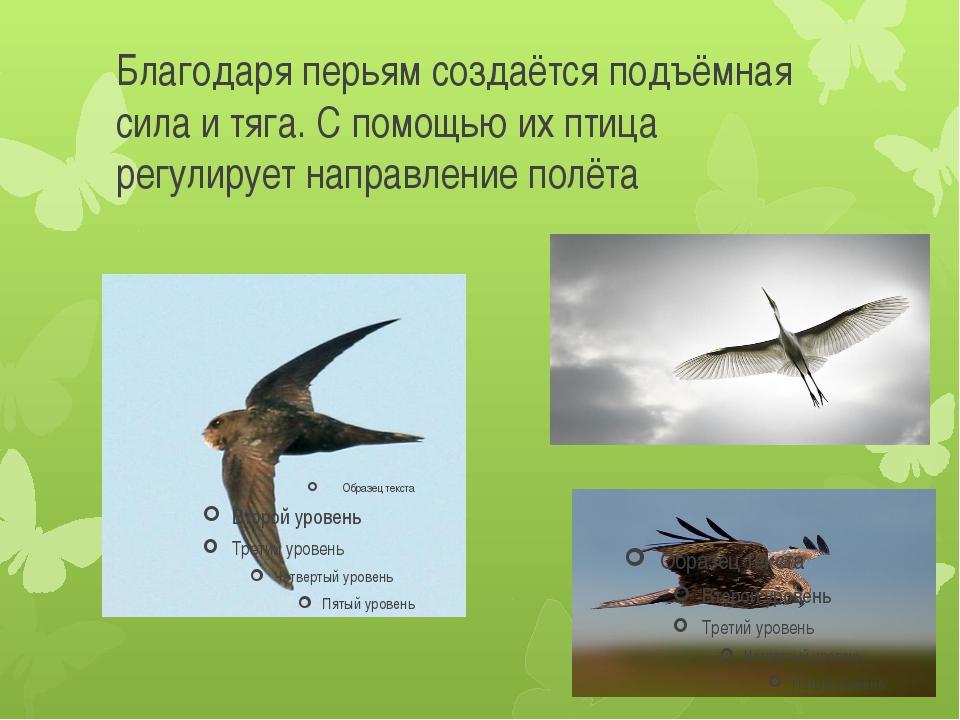 Благодаря перьям создаётся подъёмная сила и тяга. С помощью их птица регулиру...