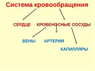 Система кровообращения СЕРДЦЕ ВЕНЫ АРТЕРИИ КАПИЛЛЯРЫ КРОВЕНОСНЫЕ СОСУДЫ