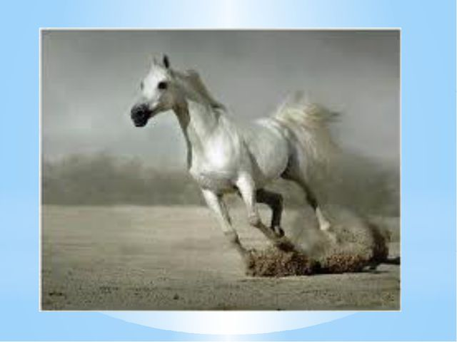 Жұмбақ Көкке шаншып құйрығын, Келеді шауып жүйрігім. (жылқы- лошадь- horse)
