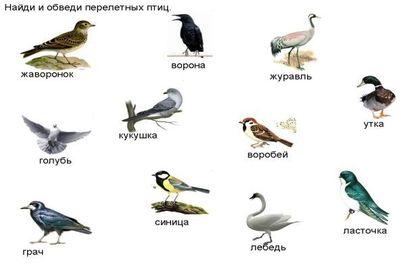 http://cdn.tipsboard.ru/images/zimuyushie_i_perelyotnie_ptici_nazvaniya_ptic-_interesnie_fakti-8.jpg