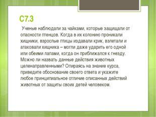С7.3 Ученые наблюдали за чайками, которые защищали от опасности птенцов. Когд