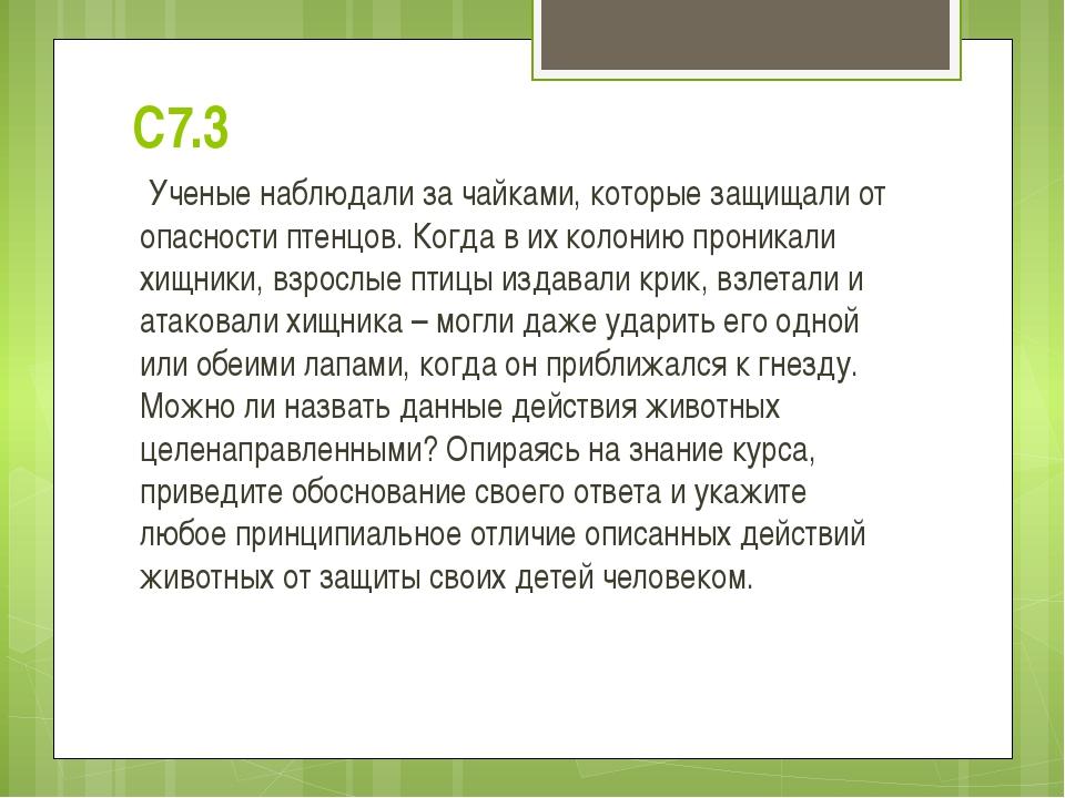 С7.3 Ученые наблюдали за чайками, которые защищали от опасности птенцов. Когд...